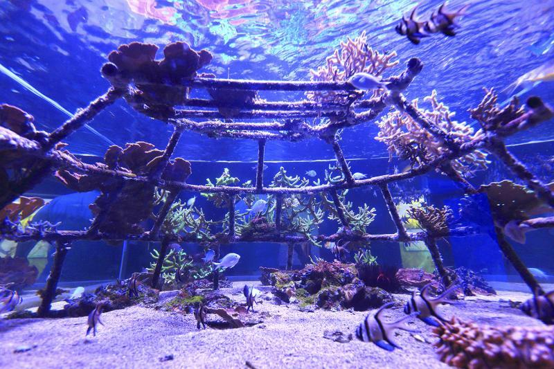 Structure servant de support au repeuplement du corail - Photo: Ph. Turpin