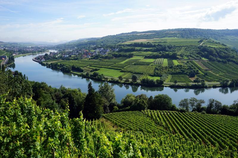 Moselle : à vélo au milieu des vignobles